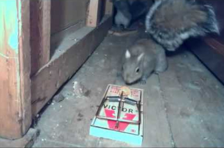Terrible: A Squirrel And A Mousetrap